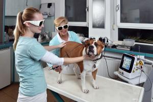 Hund-Lasertherapie_4144